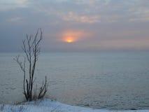Struik op de kust in sneeuw Stock Foto's
