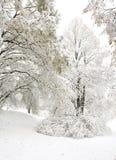 Struik tijdens sneeuwstorm Stock Foto