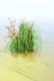 Struik van gras aan wal meer Stock Foto's