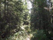 Struiken Ð ¾ F het bos stock afbeelding