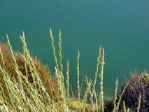 struiken in de lente op het meer Royalty-vrije Stock Foto