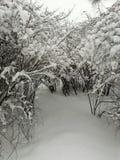 Struiken in de sneeuw stock foto