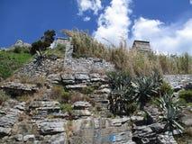 Struiken die onder rotsen groeien Royalty-vrije Stock Foto