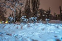 Struiken en bomen met sneeuwhigh-rise de bouw bij nacht Royalty-vrije Stock Foto's
