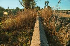 Struiken en bomen naast een steenmuur in een landbouwbedrijf royalty-vrije stock fotografie