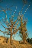 Struiken en bomen naast een steenmuur in een landbouwbedrijf royalty-vrije stock foto's