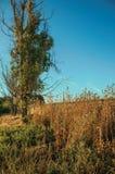 Struiken en bomen naast een steenmuur in een landbouwbedrijf stock afbeelding