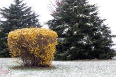 Struiken en bomen in vroege de lentesneeuw Stock Fotografie