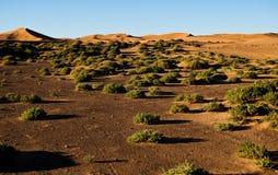 Struiken en zandduinen op de Sahara stock afbeeldingen