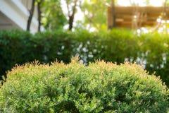 Struiken groen met groene bladeren bokeh achtergrond H stock afbeeldingen