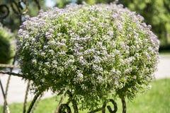 Struiken met bloemen royalty-vrije stock foto