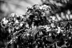 Struiken met bloemen royalty-vrije stock afbeeldingen