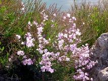 Struiken met bloemen in de lente Stock Foto's