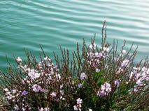 Struiken met bloemen in de lente Stock Afbeeldingen