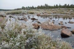 Struiken met rijp op bergrivier die worden behandeld Royalty-vrije Stock Afbeeldingen