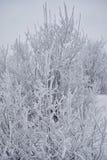 Struiken met sneeuw worden behandeld die Stock Foto's
