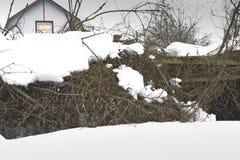 Struiken onder Sneeuw stock foto's