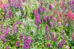 Struiken, purpere bloemen royalty-vrije stock afbeeldingen