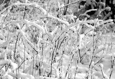 Struiken in sneeuw in zwart-wit royalty-vrije stock fotografie
