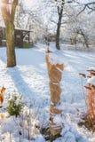 Struiken tegen de winter van jute worden beschermd die Stock Fotografie