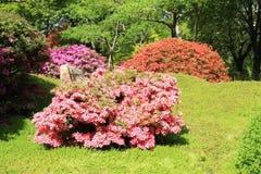 Struiken van bloemen royalty-vrije stock afbeelding