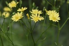 Struiken van gele en witte wildflowers in een de zomerbos royalty-vrije stock foto