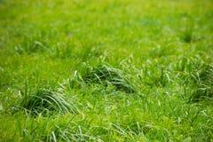 Struiken van groen gras op het gebied stock fotografie