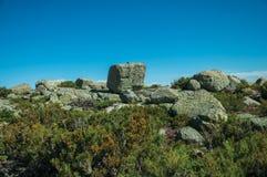 Struiken voor rotsachtig terrein op hooglanden stock foto's