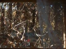 Struikgewas achter een venster stock afbeelding