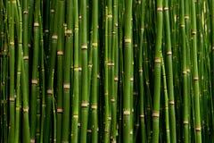 Struikgewas van jong bamboe in universiteitspark Stock Foto