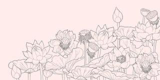 Struikgewas van lotusbloem Stock Afbeelding