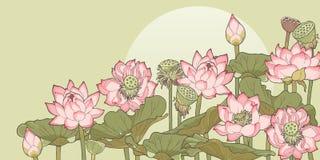 Struikgewas van lotusbloem Stock Afbeeldingen