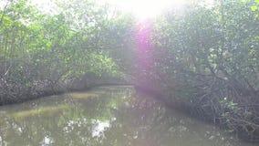 Struikgewas van mangrovebomen in de getijdestreek stock videobeelden