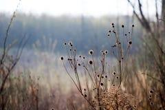 Struikgewas van oude droge distel op rand van forest_ royalty-vrije stock afbeelding
