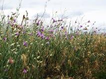 Struikgewas van wildflowers Royalty-vrije Stock Foto's