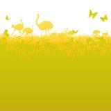 Struisvogel en struisvogelkudde in de savanne Stock Fotografie
