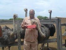 Struisvogel het eten Royalty-vrije Stock Foto's