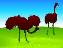 Struisvogel op groene gebiedsachtergrond Royalty-vrije Stock Foto