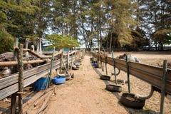Struisvogelslandbouwbedrijf Royalty-vrije Stock Foto's