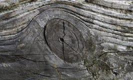 Struktur av det gamla brädet, en fatta och årliga cirklar Arkivfoton