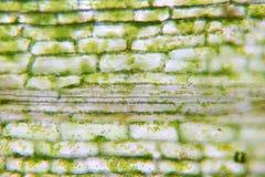 Struktur av en vegetal cell fotografering för bildbyråer