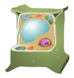 Struktur av en vegetal cell royaltyfri illustrationer