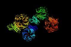 Struktur av tolb i komplex med en peptide av ten- för colicin e9 Fotografering för Bildbyråer