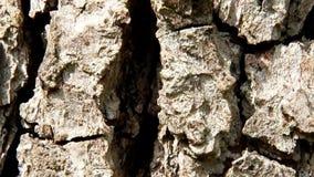 Struktur der Birnenbaumrinde Lizenzfreie Stockfotografie