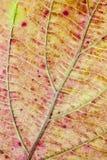 Struktur der Herbstblattfarbe Lizenzfreie Stockfotografie