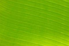 Struktur des grünen Blattes Stockbilder