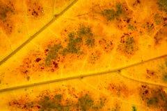 Struktur des Herbstblattes Lizenzfreie Stockfotos