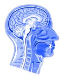 Struktur des menschlichen Kopfes stock abbildung