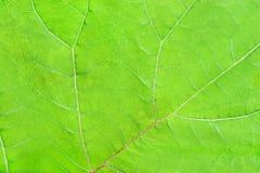 Struktur des natürlichen Hintergrundes des grünen Urlaubs Stockfoto