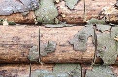 Struktur eines Baums mit einer Barke geschlagen mit einer Schaufel stockbild